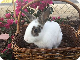 Other/Unknown Mix for adoption in Saugus, California - Sugar