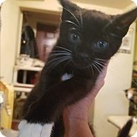 Adopt A Pet :: Stormy - Walla Walla, WA
