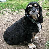 Adopt A Pet :: Missy - New Kensington, PA
