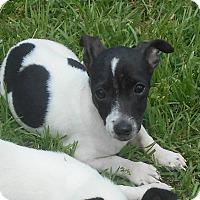 Adopt A Pet :: Donny - Allentown, NJ