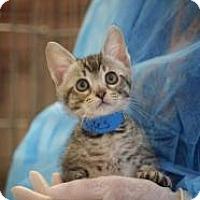 Adopt A Pet :: Stephen Pyles - Dallas, TX