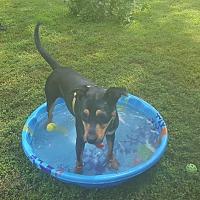 Adopt A Pet :: Eva - Memphis, TN