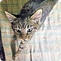Adopt A Pet :: Woody - Petersburg, VA