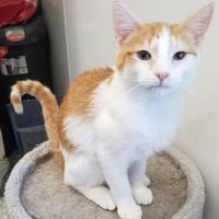 Adopt A Pet :: Alvin - Carroll, IA