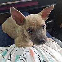 Adopt A Pet :: Gideon - Garden City, MI