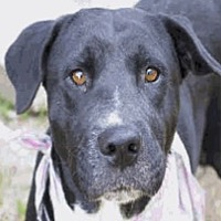Adopt A Pet :: Remy HW Low + - Aurora, CO