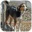 Photo 3 - Beagle/Shepherd (Unknown Type) Mix Dog for adoption in Berea, Ohio - Flower