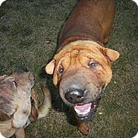 Adopt A Pet :: Henry - Spokane Valley, WA