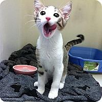 Adopt A Pet :: Dartanian FOSTER NEEDED - Lafayette, CA