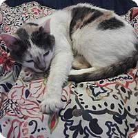 Adopt A Pet :: Kaleigha - Chicago, IL