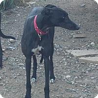 Adopt A Pet :: Bob Segal - Cottonwood, AZ