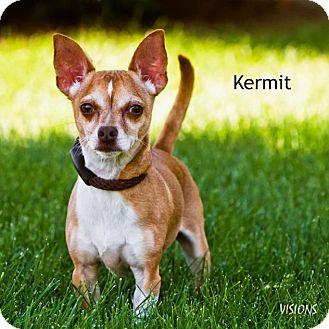 Chihuahua Mix Dog for adoption in Lisbon, Iowa - Kermit