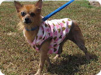 Rat Terrier Mix Dog for adoption in Windsor, Virginia - Ellie
