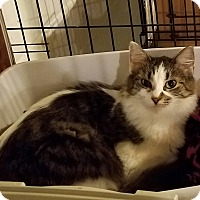 Adopt A Pet :: Amanda - Geneseo, IL
