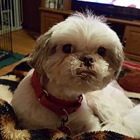 Adopt A Pet :: Bandit - Schofield, WI