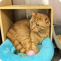 Adopt A Pet :: Talley - Colmar, PA