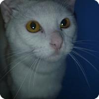 Adopt A Pet :: Kent - Hamburg, NY
