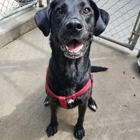 Adopt A Pet :: Sadie - Aberdeen, SD