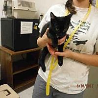 Adopt A Pet :: A574471 - Oroville, CA