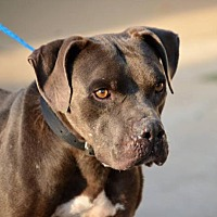 Adopt A Pet :: Connor - NEEDS FOSTER HOME - Evergreen, CO