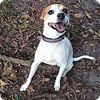 Adopt A Pet :: Benji - Coral Springs, FL