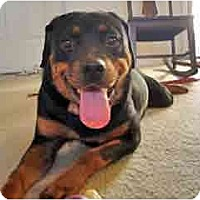 Adopt A Pet :: Maxine - Courtesy Listing - Scottsdale, AZ