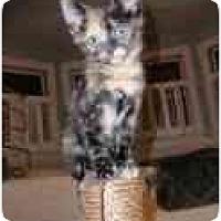 Adopt A Pet :: Confettti - Arlington, VA