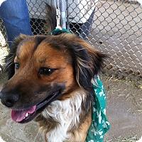 Adopt A Pet :: Robby - Phelan, CA