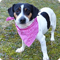 Adopt A Pet :: Mary - Mocksville, NC