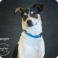 Adopt A Pet :: Ranger - Phoenix, AZ