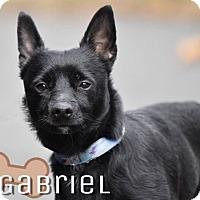 Adopt A Pet :: Gabriel in CT - Manchester, CT