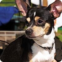 Adopt A Pet :: Chico - Marion, NC