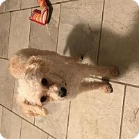Adopt A Pet :: Pearl - Columbus, IN