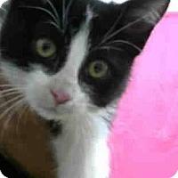 Adopt A Pet :: Bo - Eureka, CA