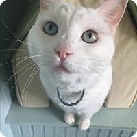 Adopt A Pet :: Angel - Shelbyville, KY