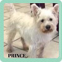 Adopt A Pet :: PRINCE - Frisco, TX