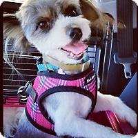 Adopt A Pet :: Xima - Encino, CA