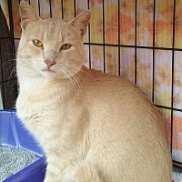 Adopt A Pet :: Calvin - Rochester, MN