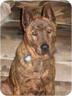 Jindo/Akita Mix Dog for adoption in Southern California, California - Malaika (Laika)
