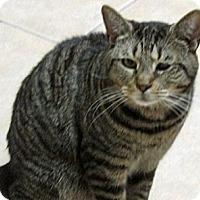 Adopt A Pet :: Ben - Carlisle, PA