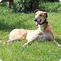 Adopt A Pet :: Stewart - Philadelphia, PA
