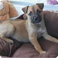 Adopt A Pet :: Heidi - Minneola, FL