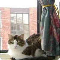 Adopt A Pet :: Percy - Etobicoke, ON