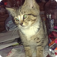 Adopt A Pet :: Aspen - Kensington, MD