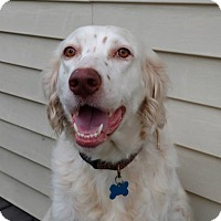 Adopt A Pet :: Princess Leah- Iowa - Wood Dale, IL