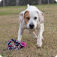 Adopt A Pet :: Samuel - Savannah, TN