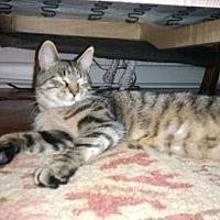Adopt A Pet :: HiRiss - Bronx, NY