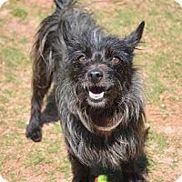 Adopt A Pet :: Arti - Lawrenceville, GA