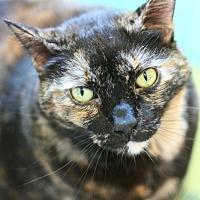 Adopt A Pet :: Hestia - Canoga Park, CA