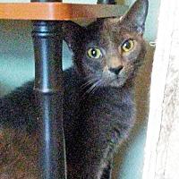 Adopt A Pet :: Smokey - Marion, NC